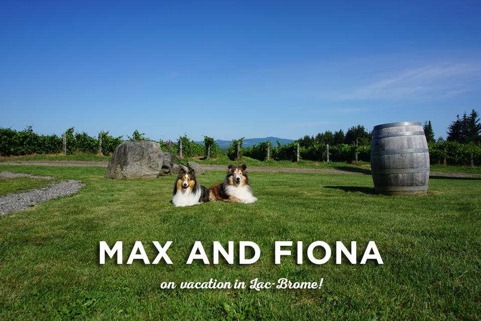 Max and Fiona on vacation in Lac-Brome