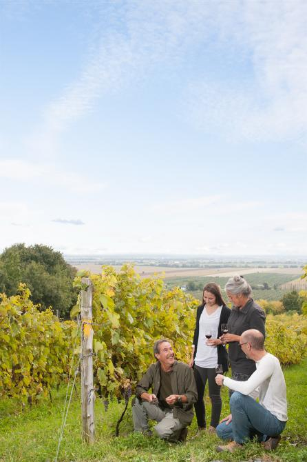 Wine Country Passport: Self-guided visit - Coteau Rougemont