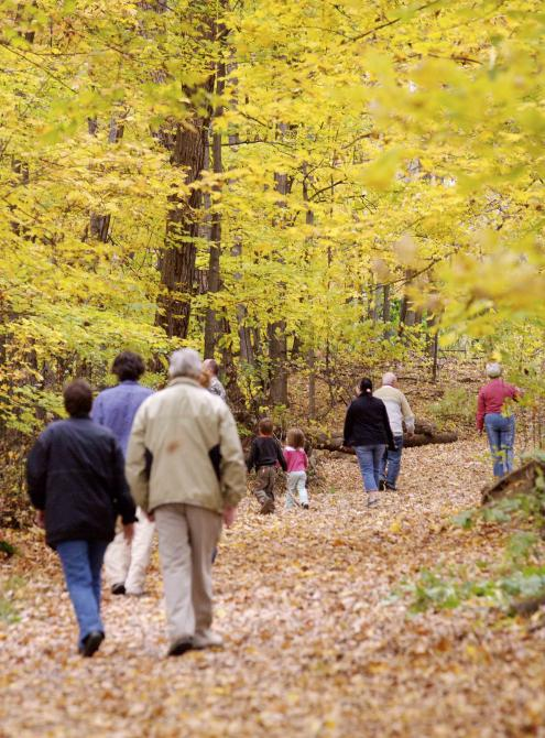 Walk during the foliage at Bois Beckett: