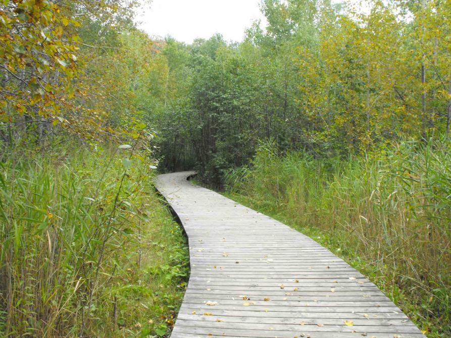 The Marais Réal-D.-Carbonneau: Experience the soothing music of Mother Nature. 5 minutes from downtown Sherbrooke, the Marais Réal-D.-Carbonneau offers nature and all its wonders.