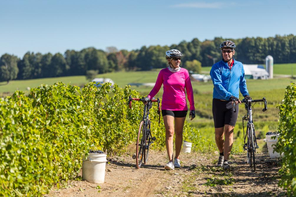 A ride on the Wine route: A ride on the Wine route. Photo : Mathieu Dupuis