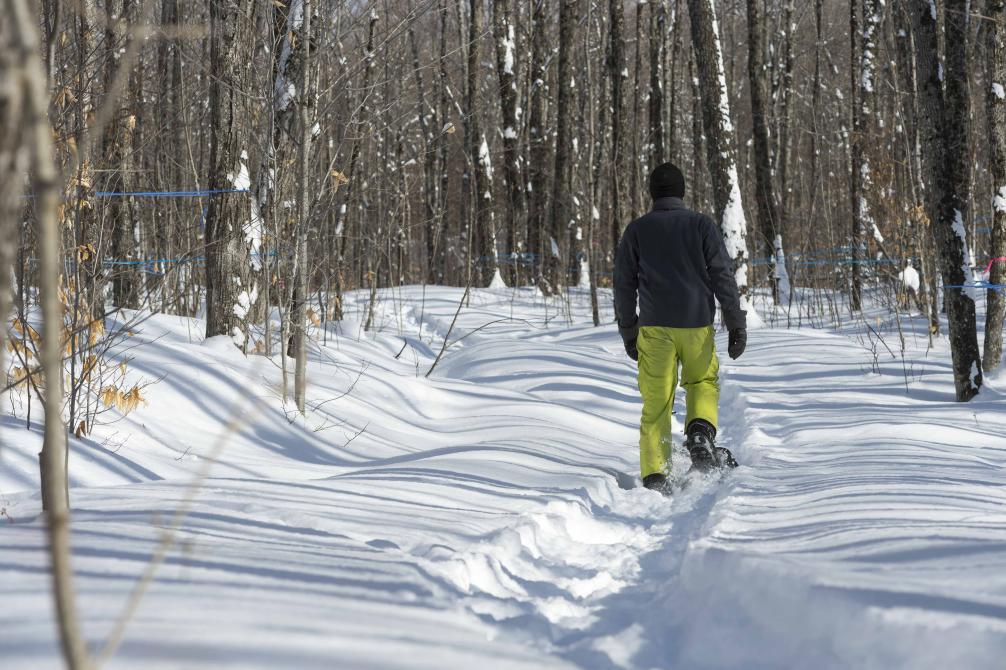 Sentier raquette: In winter, our hiking trails turn into snowshoe trails.
