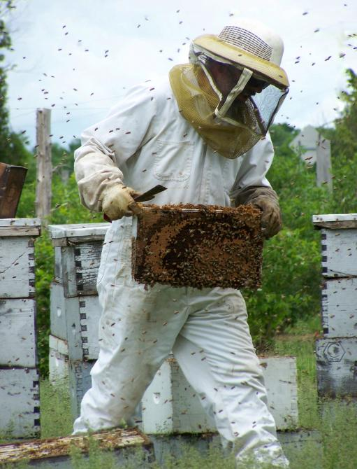 The harvest of our delicious natural HONEY: