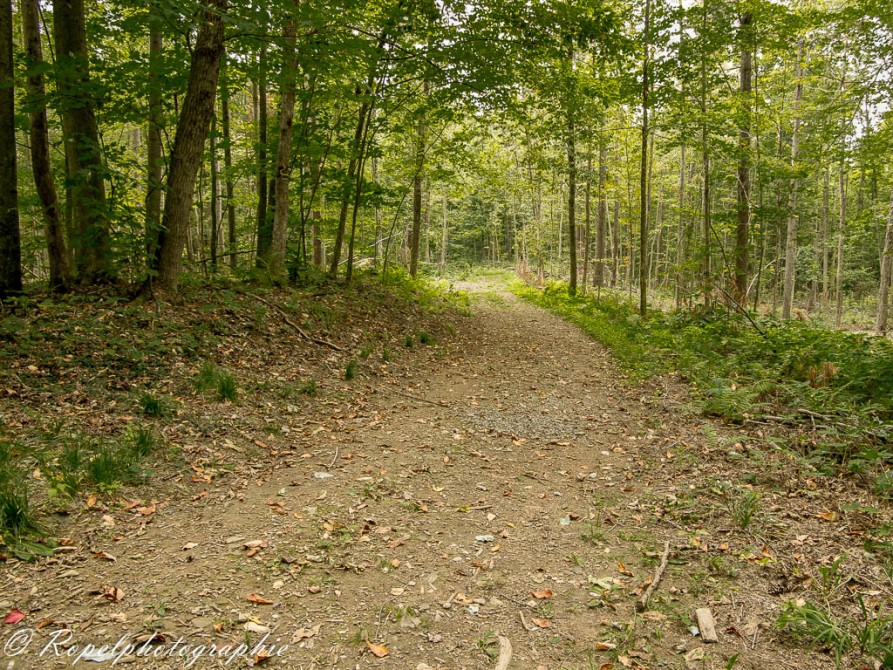 Walking trails: