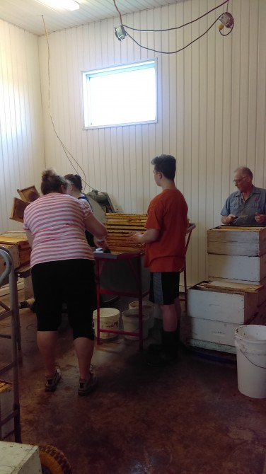 Guide tour of the miellerie. Extraction of the honey frames.: Working visit.  Extraction of the honey frames.