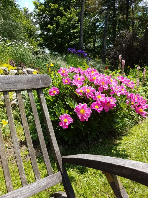Perennial garden: We have more than 50 varieties of perennials for you to enjoy