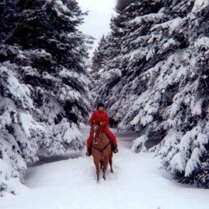 Dog sleigh and horseback riding packages