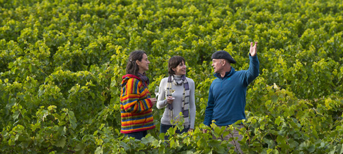 open house wine route